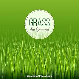 草背景水滴
