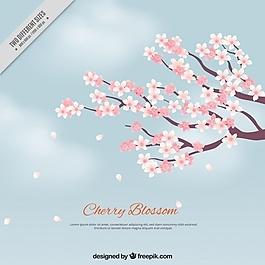 美麗的櫻花背景