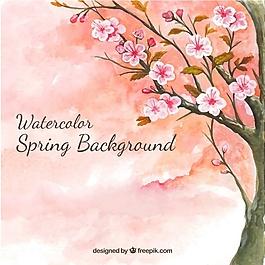 水彩背景與櫻桃樹