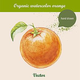 水彩繪橙子
