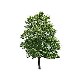 綠色清新大樹元素