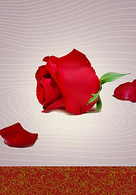 玫瑰花海报