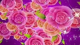 百变玫瑰花卉视频