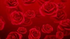 红色玫瑰花朵视频