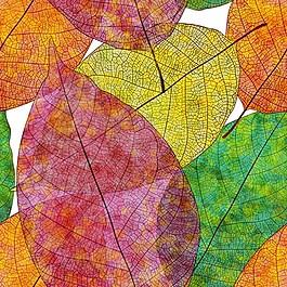 彩色漂亮秋季叶子矢量图
