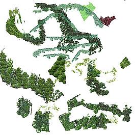 植物平面图素材--湿地 (1)