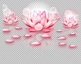各种粉红荷花莲花免抠png透明图层素材