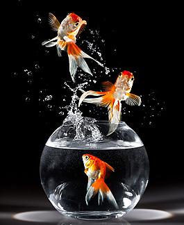 金魚跳出魚缸背景圖片素材