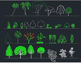 园林立面植物图