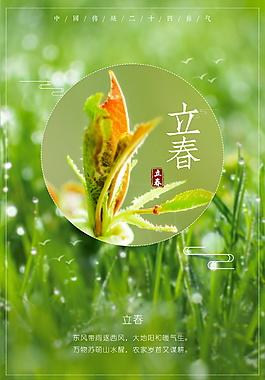 綠色精美植物立春海報