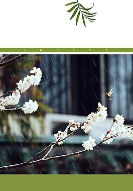 雨季花枝谷雨海報背景設計