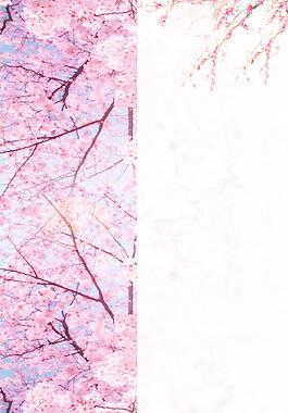 春天櫻花背景