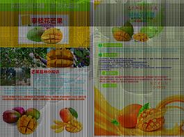 攀枝花芒果双页宣传单