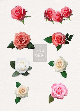 精美的玫瑰花花朵元素素材