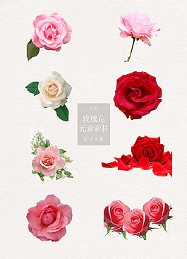 精致的玫瑰花花朵元素素材