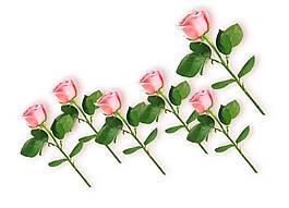 矢量手繪浪漫粉色玫瑰花