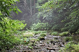 深山环境音效素材