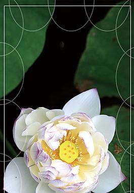 墨绿底纹鲜美花朵处暑广告背景素材
