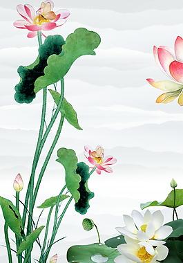 荷叶花朵白莲处暑广告背景素材