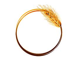 金色成熟小麥圓形裝飾矢量圖