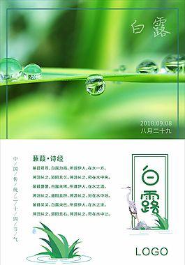 白露節氣綠色海報