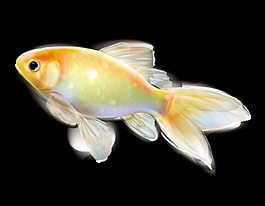 卡通透明金鱼元素