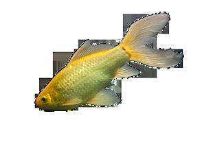 鱼高清免抠图