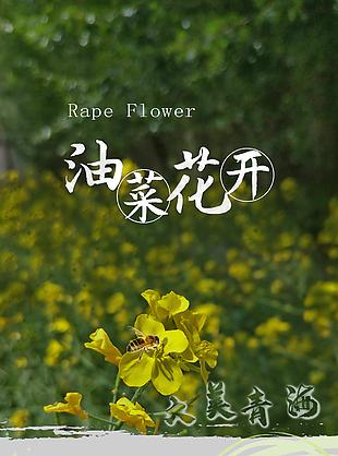 青海油菜花
