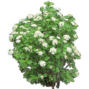灌木绿树绿叶春天生机