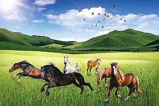 草原上的馬