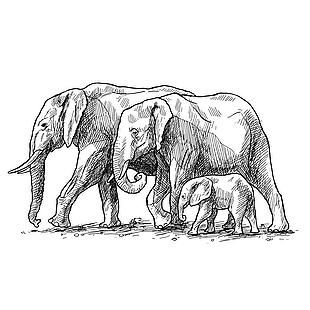 大象矢量图素材