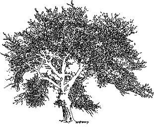 树木铅笔画矢量图