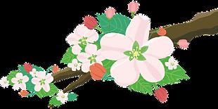 苹果花 鲜花 自然水果树春花园