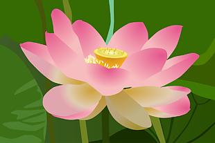 莲花 花 粉色的花