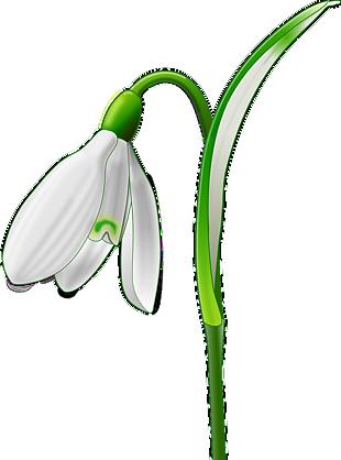 植物 百合 水仙