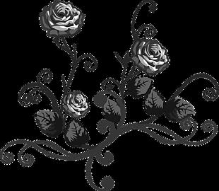 抽象 艺术 装饰 花 玫瑰 侧影
