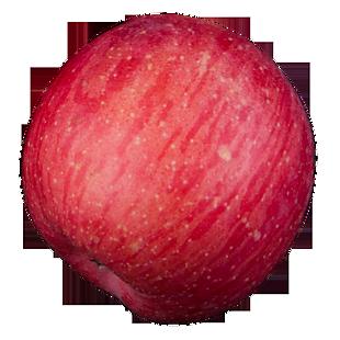 实拍果林果树一个水果