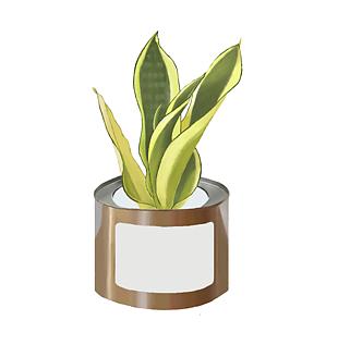 绿植虎皮兰手绘插画植物ins风北欧