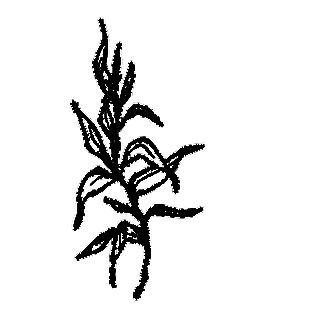 花朵矢量圖免扣