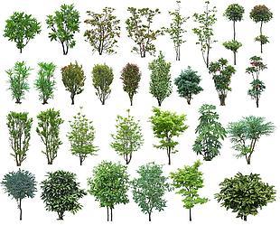 高清psd植物素材(灌木1)