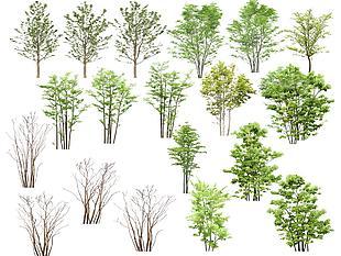 高清psd植物素材(喬木1)
