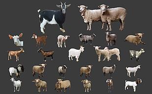 綿羊山羊分層素材