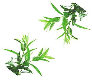綠葉分層素材