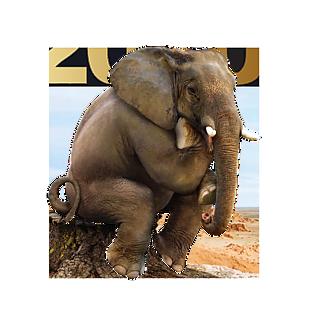 大象 素材 效果