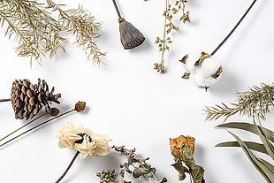 自然植物干花素材摄影图