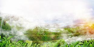 綠茶茶葉海報背景