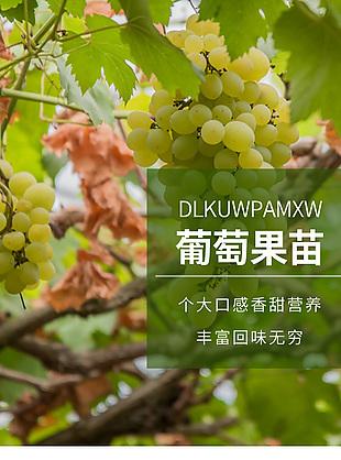 葡萄树苗详情页