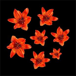 花 花朵 圓形花 紅色花朵