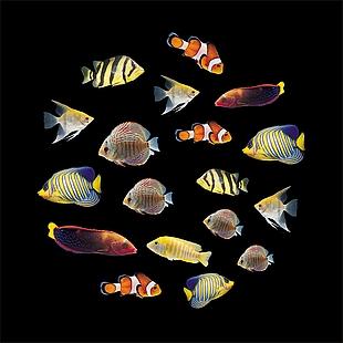 彩色魚+海底魚+魚+海魚