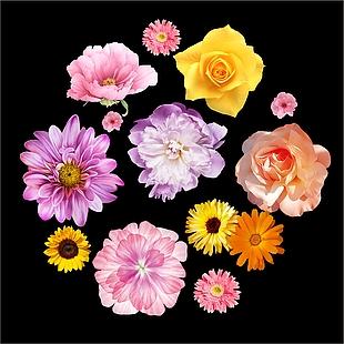 花 花朵 花瓣 各种花图案